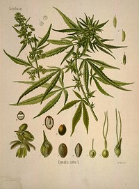 CBD, The Endocannabinoid System and Eternal Bliss  in Bristol