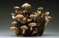 Shroomshop: Mushroom Cultivation Made Easy in Bristol