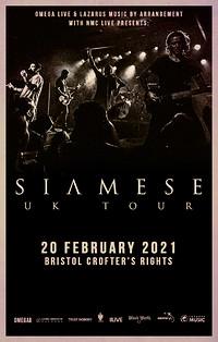 Siamese in Bristol