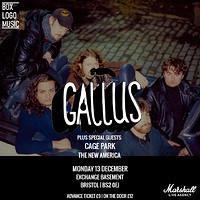 Gallus in Bristol