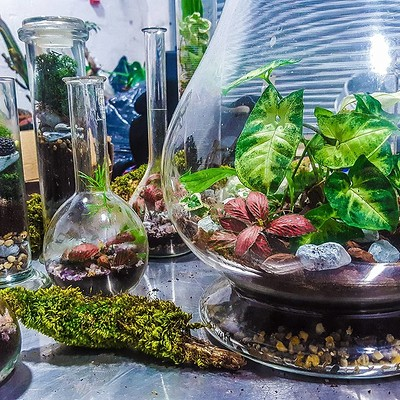 Terrarium Workshop with Vegan Canapés and Prosecco at All Hallows Hall in Bristol