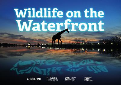 Wildlife on the Waterfront at Arnolfini in Bristol