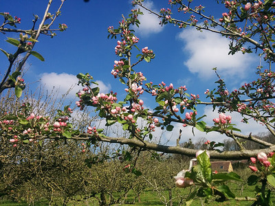 Cider Tasting and Orchard Tour at Barleywood Orchard, Wrington BS40 5SA in Bristol