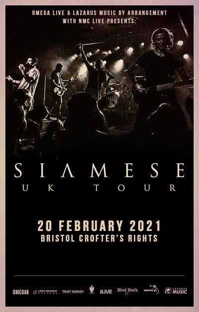 Siamese at Crofters Rights in Bristol