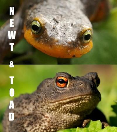 Newt & Toad at El Rincon in Bristol